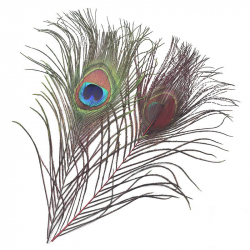 Перо Veniard Peacock Eye Top Dyed (Red)